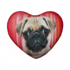 АСИ Сердце собачки, 18-01мив